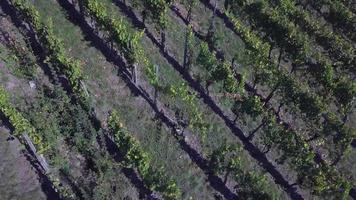 vista aérea de um vinhedo no outono video