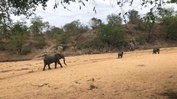 manada de elefantes marchando em direção ao poço video