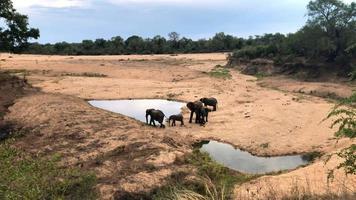 Elephants herd with cute babies