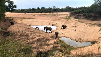manada de elefantes com bebês fofos video