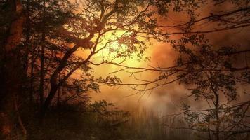 paisaje forestal al atardecer