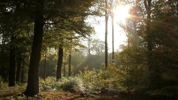 Sunlight In Green Forest During Summertime video
