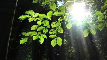 luz do sol na floresta verde durante o verão