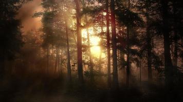 paisaje de bosque de luz de la tarde