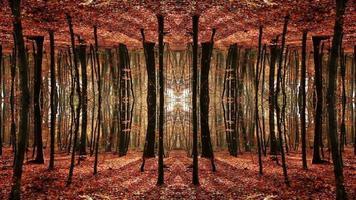 simetría de otoño de fantasía