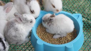 conejitos bebé comiendo