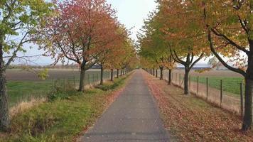 beco em parque de outono com folhagem colorida