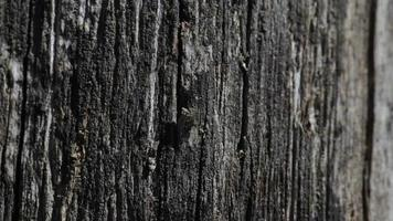 Fondo de textura de madera negra vieja video