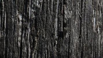 Fondo de textura de madera negra vieja