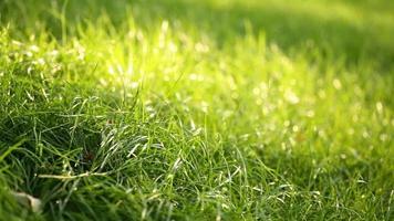 pasto verde en el parque de primavera