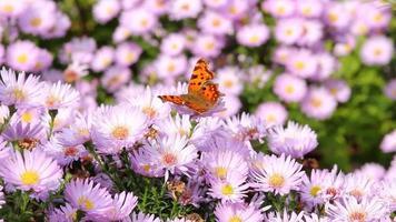 mariposa en flores de verano cerrar