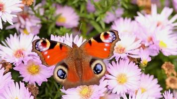 Butterfly On Summer Flowers Close Up