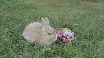 Bunny In The Meadow With a Bouquet