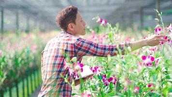 fazendeiro asiático examinando flor