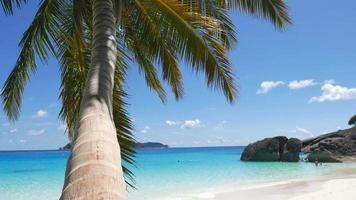 albero di cocco in spiaggia video