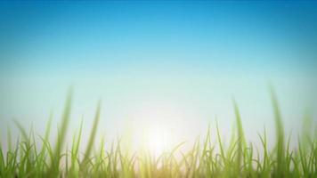 Grasblätter auf schöner Himmelhintergrundschleife video