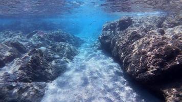 snorkel en el mar con un banco de peces en 4k video