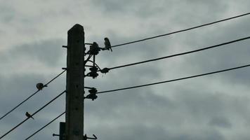 Silhouette d'oiseaux réunis sur un câble électrique