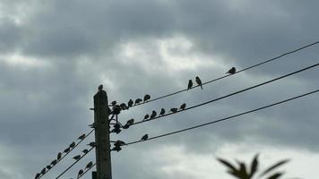 Silhouette of birds meeting on an electric wire cable