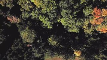Aerial top down view of trees in 4K