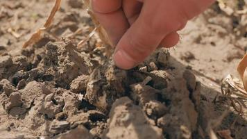 granjero desenterra una cabeza de ajo