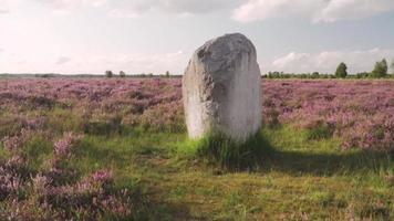 pedra em um campo video