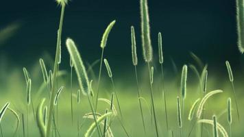 Beautiful Green Reeds background