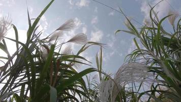 viento que sopla a través del campo
