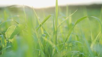 herbe verte sur le terrain