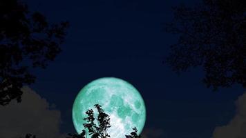 super luna se eleva en la parte posterior de las hojas de silueta