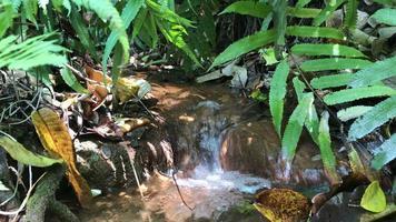 pequeña cascada fluye a través de un pequeño arroyo.