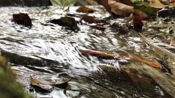 a água corre por um pequeno riacho.