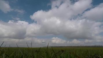nuvole che si muovono sul campo verde