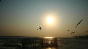 las gaviotas vuelan sobre la puesta de sol en el mar