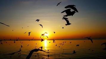 Silhouettes of birds over the sunset video
