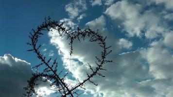 Heart Shaped of Plant and Birds Flying