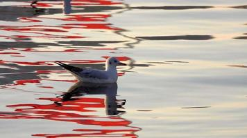 Seagull and Calm Sea Water
