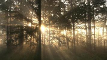 rayos de sol en el bosque de la mañana