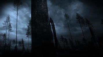 forte tempesta di fulmini nella foresta