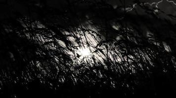 herbe sombre dans la tempête de foudre
