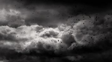Stormy Sky And Black Crows
