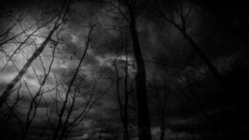foresta di fantasia oscura durante la notte