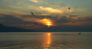 Flock of Flying Seabirds Sunset Landscape