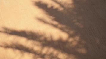 sombra abstracta de hojas de palma