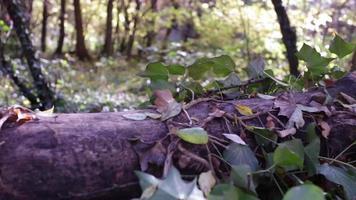 alejarse de un árbol caído