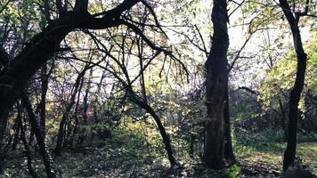 arbre forestier zoom avant video