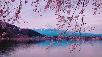 Cherry Blossoms over Riverside and Mount Fuji