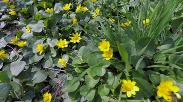 timelapse de flores floreciendo bajo el sol de primavera