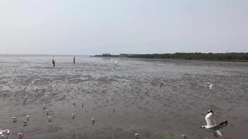 bando de gaivotas na praia