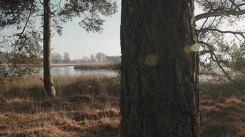 Pasando árboles temprano en la mañana en la naturaleza. video